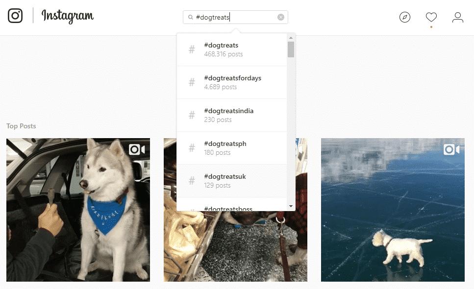 Instagram Marketing for Business dogtreats