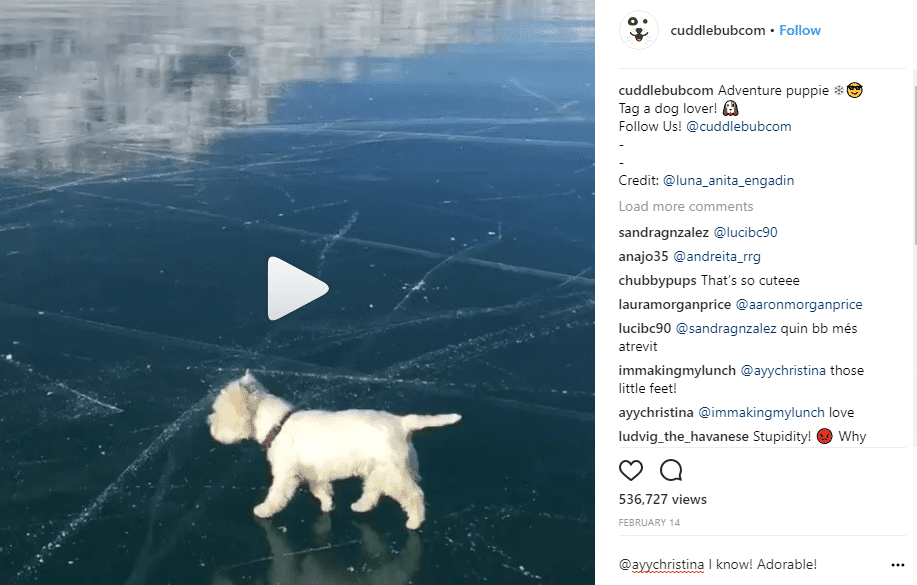 Instagram Marketing for Business White Dog 2