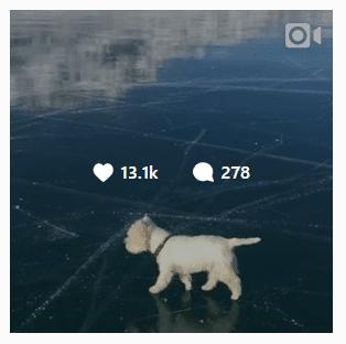Instagram Marketing for Business White Dog